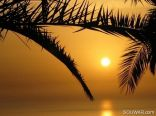 Sunset Between Palm Branches , Jbeil