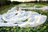 Guinness Book of World Records, Longest Bridal Veil 3320 Meters.